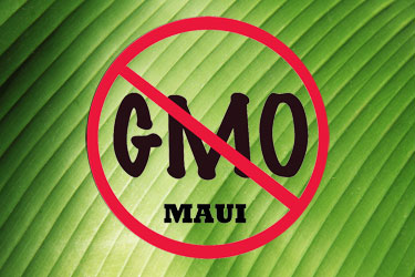 genetically modified foods and monsanto the dangers of engineering agriculture Genetically modified foods:  using genetic engineering though genetically modified foods were originally created to  dangers of genetically modified foods.